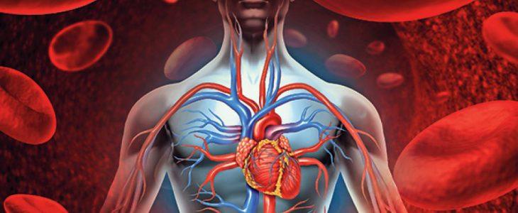 a szív- és érrendszer hatása magas vérnyomásban